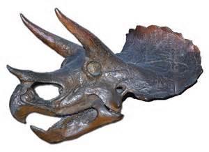 triceratop skull