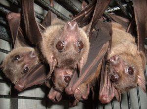 Batty for Bats @ Carbondale Public Library | Carbondale | Pennsylvania | United States